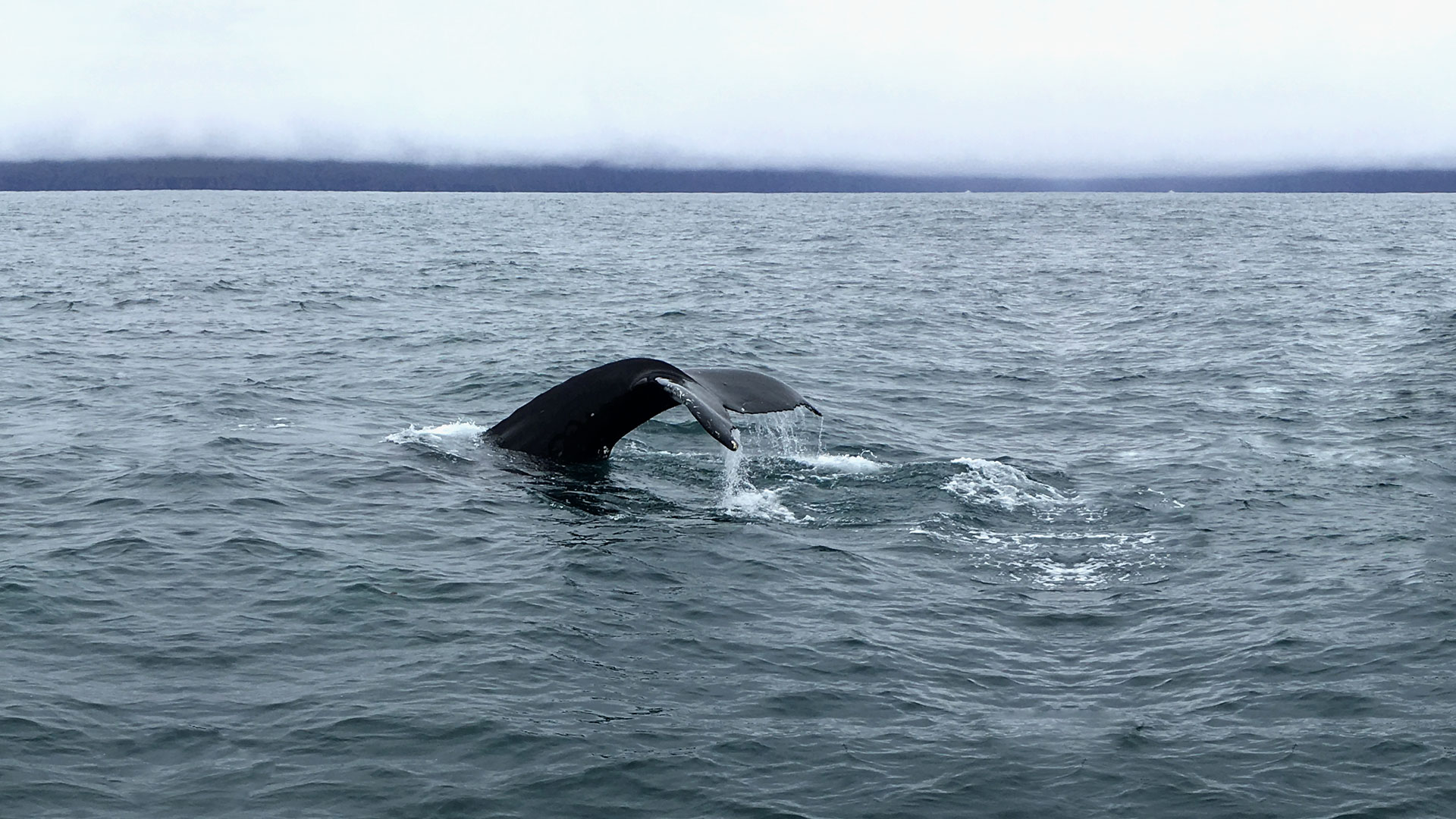 Uno degli insegnamenti dall'avvistamento di balene in Islanda