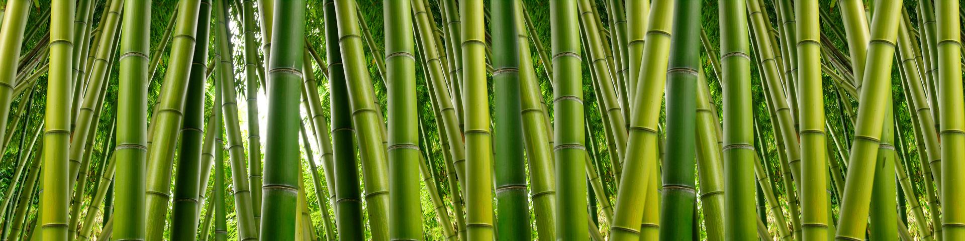 Il Bambù è una delle fibre ecosostenibili utilizzate per creare carte ecologiche e sostenibili